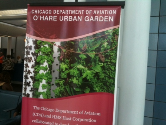 A hopeful sign of moving in the right direction: O'Hare airport's vegetable garden!